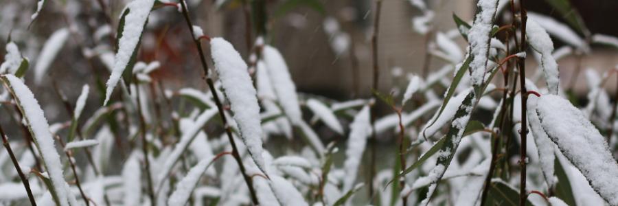 How Important is Landscape Winterization?